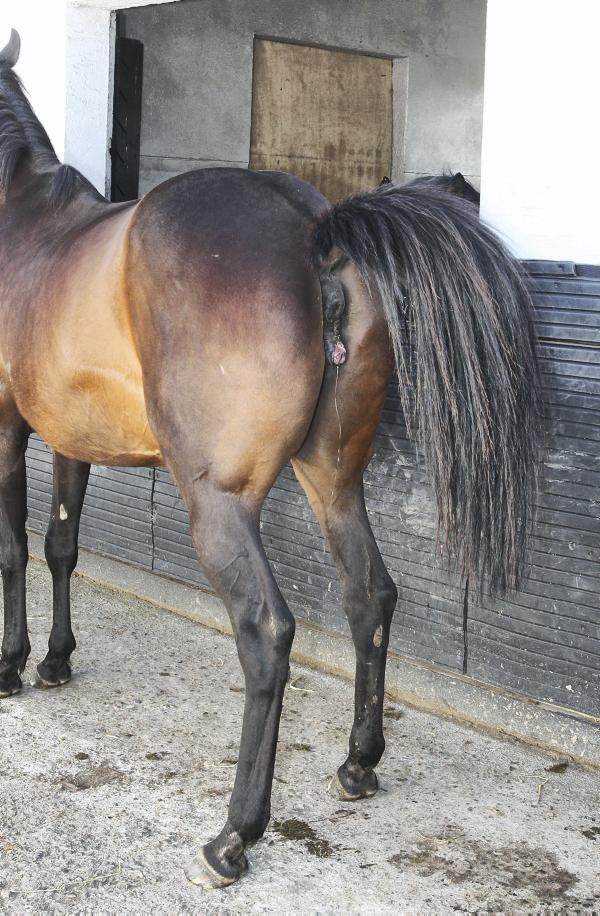 Central Equine Vets In Edinburgh