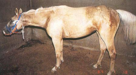 Tetanus vaccinations at Central Equine